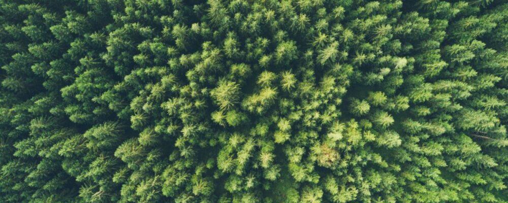 green-economy-ambiente-digital-influencer-marketing
